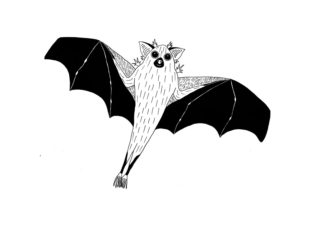 Dwarf Epauletted Fruit Bat